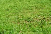 Gras auf grüner Wiese im Sommer
