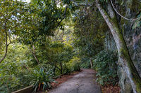 Path through the trees and plants of the rainforest