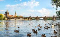 Birds on river Vltava