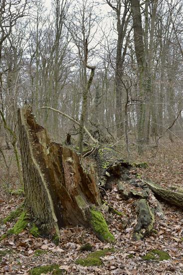 Vergänglichkeit... Hambacher Forst *Nordrhein-Westfalen*