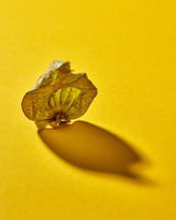 Dry shell Physalis fruit on a yellow background, soft focus with soft shadow.