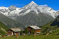 Bergweide auf der Täschalp, hinten das Weisshorn,  Täsch, Wallis, Schweiz