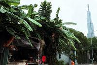 provisional hut under bananas trees