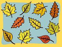 modern autumn leaf design in bold colors