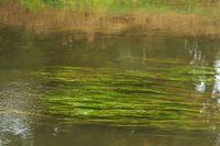 Gräser im Bachlauf