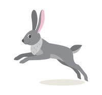 Cute gray jumping rabbit hare isolated on white background