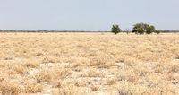 Kalahari desert, salt flat, no where, empty plain