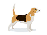 Cute beagle icon, small hunting dog with white and brown fur isolated, domestic animal, vector illustration