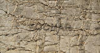 bark texture, detail