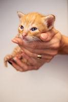 Woman holding cute newborn kitten