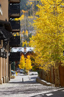 Street with aspens in Vail, Colorado, USA.