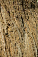 Closeup of a tree bark as a background