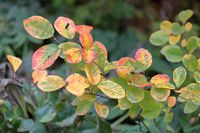 Autumn tree branch with bright foliage