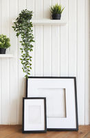 Plants on white shelves on white wall in the room