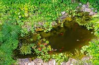 Garden pond with gold fisches