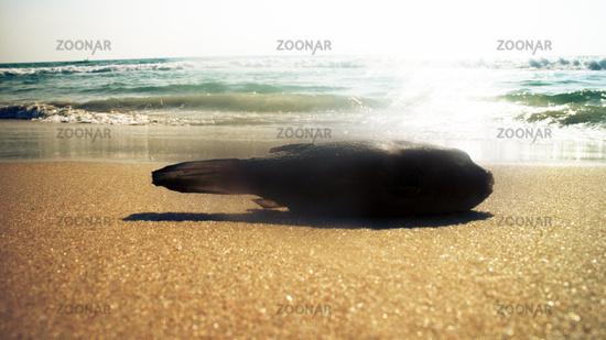 beaches on coast of Arabian sea
