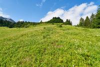 Grüne Wiese in den französischen Alpen