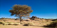 Desert Landscape with Acacia in Moul Naga valley at in Tassili nAjjer national park in Algeria