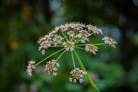 Pflanze im Wald im Sommer