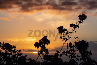 Sunset with Bougainvillea