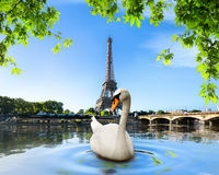 Swan and Eiffel Tower