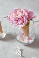 Post card for congratulations of sweet waffle cone with beautiful pink peony flower and petals in a glass cup on a gray background.