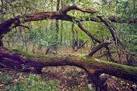 Fall tree trunk
