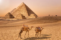 The Pyramids and camels in the Giza desert, Egypt