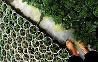 feet wear plastic sandals walk in garden
