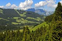 Voralpine Landschaft mit Weiden und Wäldern im Sommer