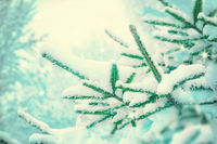 Beautiful fir tree covered snow, closeup. Winter Christmas scenic greeting card background, copy space. Holiday landscape, spruce branches, falling snowflakes. Nature outdoors. Soft vintage toned
