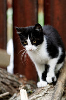 Black and wihte cat walking on a stamp