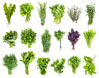 various bunches of fresh edible greens isolated