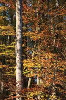 Herbstwald Ausschnitt