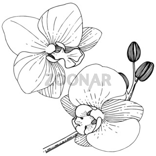Orhid flower in a vector style isolated.
