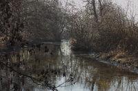 Bachlauf durch ein Feuchtgebiet