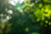 Green summer garden. Blurred natural background with bokeh effect on a sunny day.