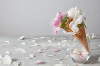 Greeting card with nice gentle flowers of peony, a water droplets on them in a wafer cones, petals on a gray background.