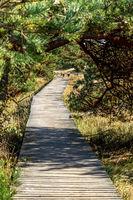 Naturschutzgebiet an der Ostsee -29.jpg