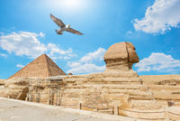 Bird over Giza