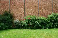 Rosenbüsche vor Backsteinfassade