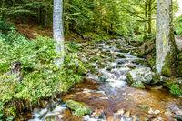 Rocky stream flowing through lush green woodland