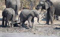 Elephant calf taking a mudbath