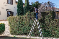 Man at work on a ladder with hedge trimmer in action