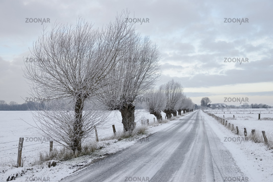 Kopfweiden im Schnee... Bislicher Insel * Nordrhein-Westfalen *, Winterstimmung