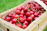 Basket with ripe cherries