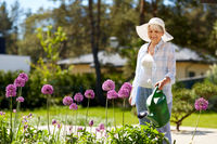 senior woman watering allium flowers at garden
