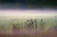Autumn meadows in the fog