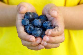 Blaubeeren Heidelbeeren Früchte Beeren Blaubeere Heidelbeere Frucht Beere Sommer halten Hände