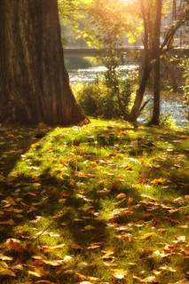Autumn leaves in the park along river Gera in Erfurt